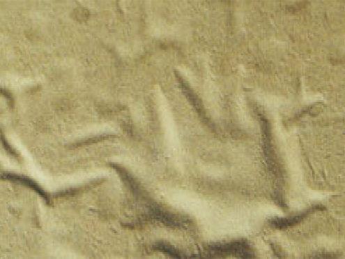 Sơn dewpon chống nóng, rạn nứt mùa hè