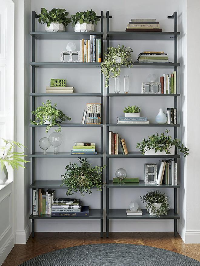 Mang mảng xanh của cây chình ảnh vào giá sách để biến góc đọc sách của bạn thành nơi tuyệt vời